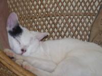 Brat_cat_2