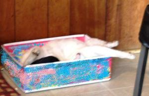 Cat_box_001_2